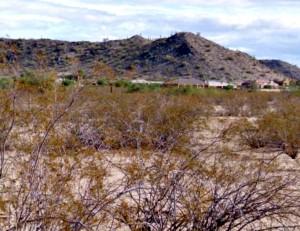 mt-vista-ranch-lot(5)